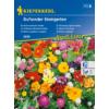 Kép 1/2 - Kiepenkerl virágmag, Illatos sziklakerti virágok, Duftender Steingarten