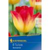 Kép 1/2 - kiepenkerl tulipa suncatcher tulipán virághagyma