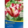 Kép 1/2 - kiepenkerl tulipa estella rijnveld papagáj tulipán virághagymák