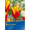 Kép 1/2 - kiepenkerl tulipa fire wings tulipán virághagymák