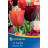 Kép 1/2 - kiepenkerl halloween mix vegyes tulipán virághagymák