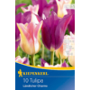 Kép 1/2 - kiepenkerl tulipa landlicher charme tulipán hagymák