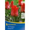 Kép 1/2 - kiepenkerl tulipa rotkappchen tulipán virághagymák