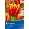 Kép 1/2 - kiepenkerl tulipa fabio tulipán virághagymák