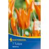Kép 1/2 - kiepenkerl tulipa ballerina liliomvirágú tulipán hagymák