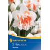 Kép 1/2 - kiepenkerl narcissus replete teltvirágú nárcisz virághagymák
