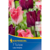 Kép 1/2 - kiepenkerl lilac dreams vegyes korona tulipán hagymák