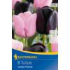 Kép 1/2 - kiepenkerl candy friends tulipán virághagymák