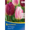 Kép 1/2 - kiepenkerl dynamic duo tulipán virághagymák