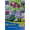 Kép 1/2 - kiepenkerl color symphonie blue harmony virághagyma összeállítás