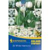 Kép 1/2 - kiepenkerl white harmony fehér virághagyma összeállítás