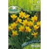 Kép 1/2 - Pegasus Narcissus Jetfire nárcisz virághagymák