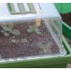 Kép 4/7 - Nortene - Heating Grow
