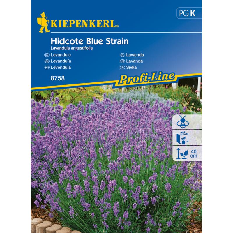 kiepenkerl hidcote blue strain levendula