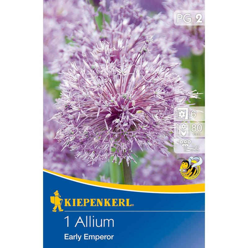 kiepenkerl allium early emperor díszhagyma virághagyma