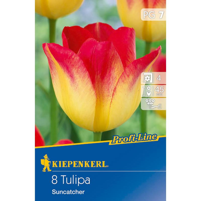 kiepenkerl tulipa suncatcher tulipán virághagyma