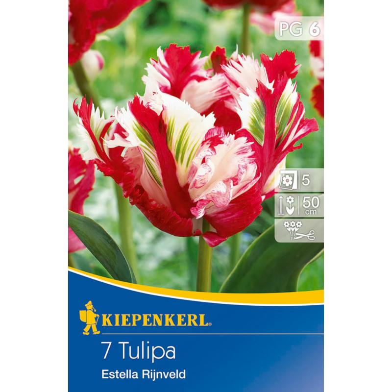 kiepenkerl tulipa estella rijnveld papagáj tulipán virághagymák