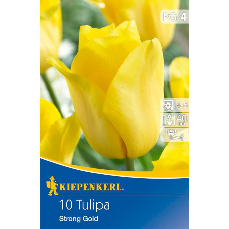 kiepenkerl tulipa strong gold triumph tulipán virághagymák