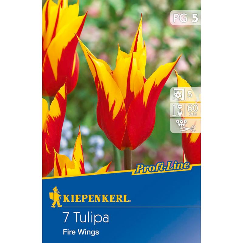 kiepenkerl tulipa fire wings tulipán virághagymák