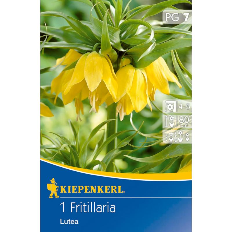 kiepenkerl fritillaria lutea császárkorona virághagyma