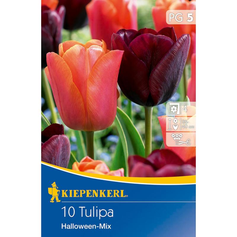 kiepenkerl halloween mix vegyes tulipán virághagymák