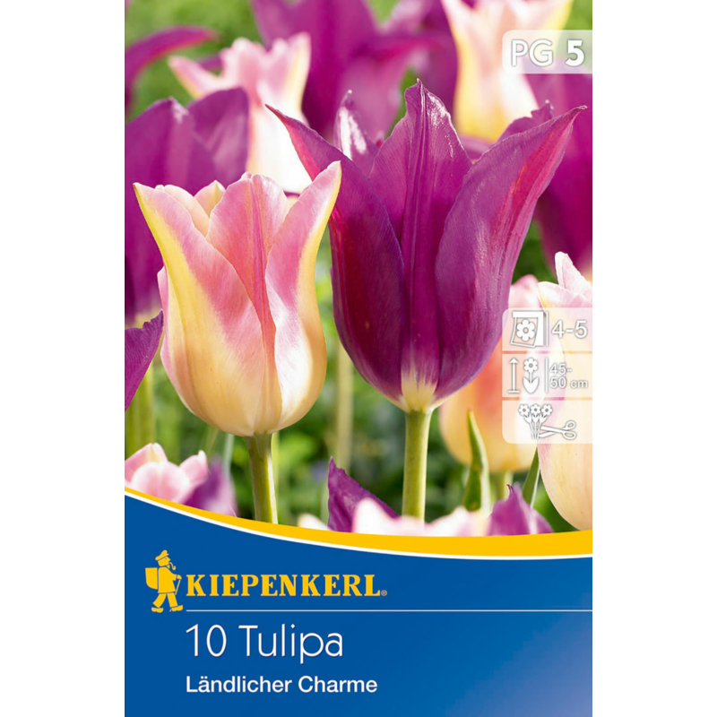 kiepenkerl tulipa landlicher charme tulipán hagymák