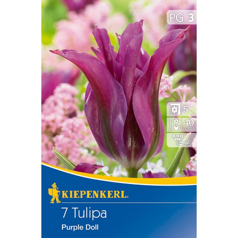 kiepenkerl tulipa purple doll tulipán virághagymák