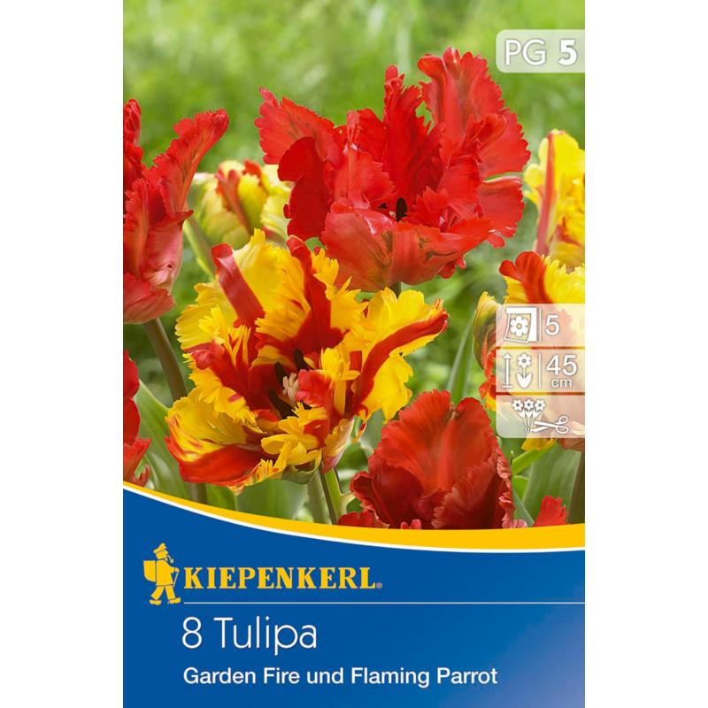 kiepenkerl tulipa garden fire tulipán virághagymák