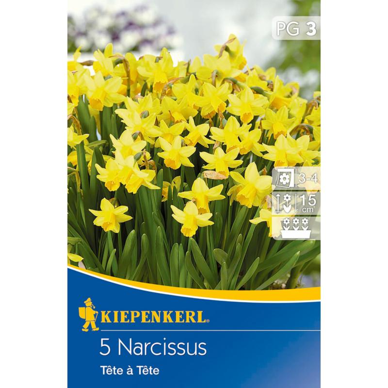 kiepenkerl narcissus tete a tete botanikai nárcisz virághagymák
