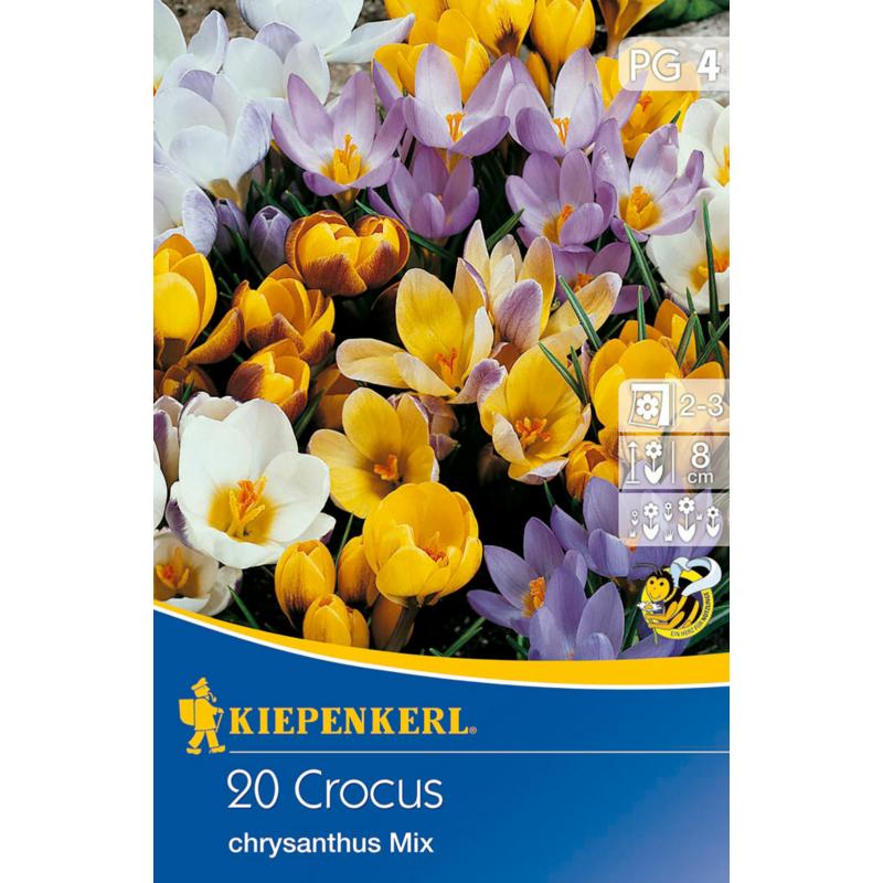 kiepenkerl crocus chrysantus mix vegyes kókusz színkeverék