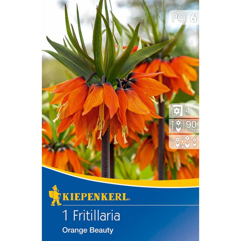 kiepenkerl császárkorona virághagyma fritillaria orange beauty