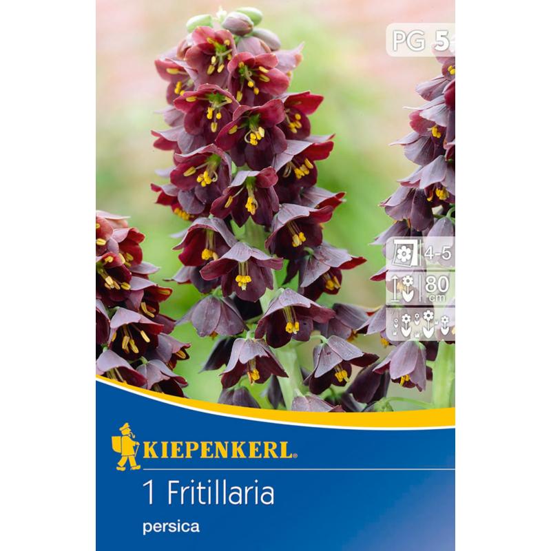 kiepenkerl fritillaria persica császárkorona virághagyma