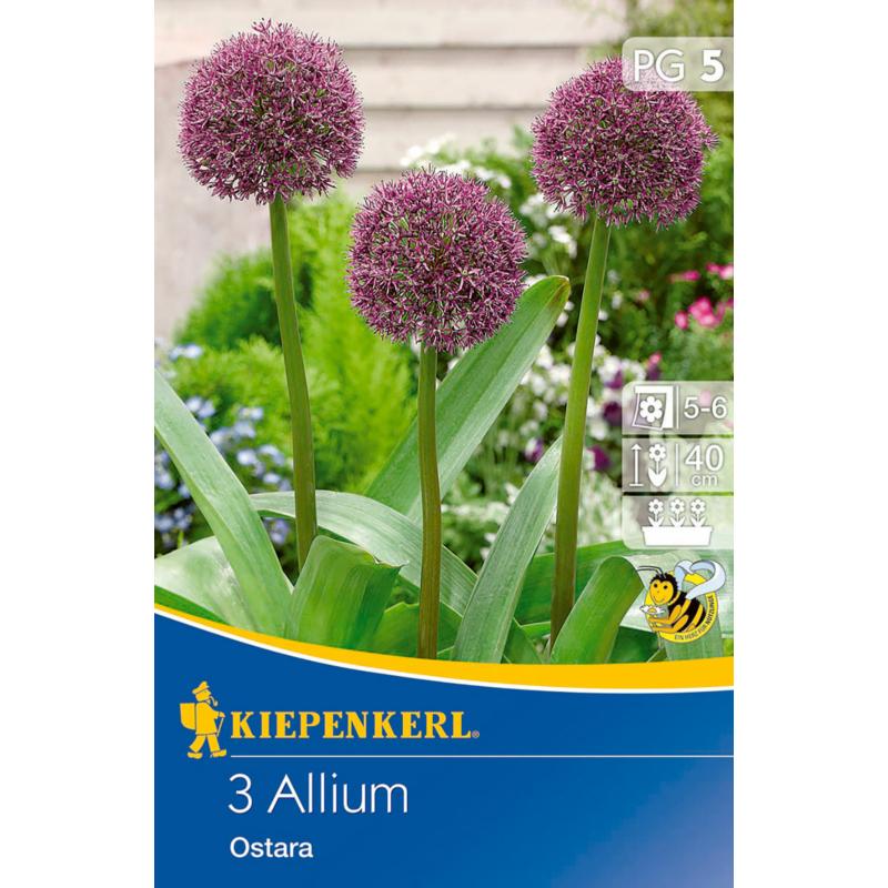 kiepenkerl allium ostara díszhagyma virághagymák