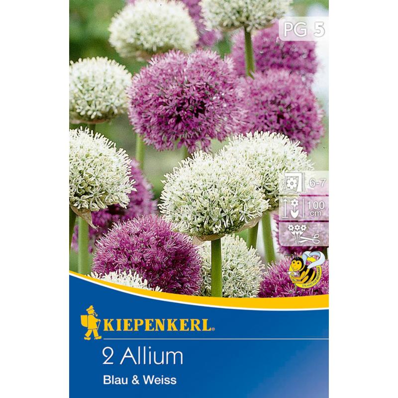 kiepenkerl allium blau und weiss díszhagyma virághagymák