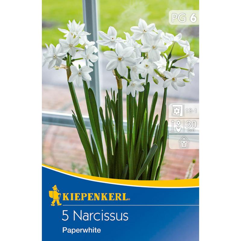 kiepenkerl nárcisz virághagymák narcissus paperwhite