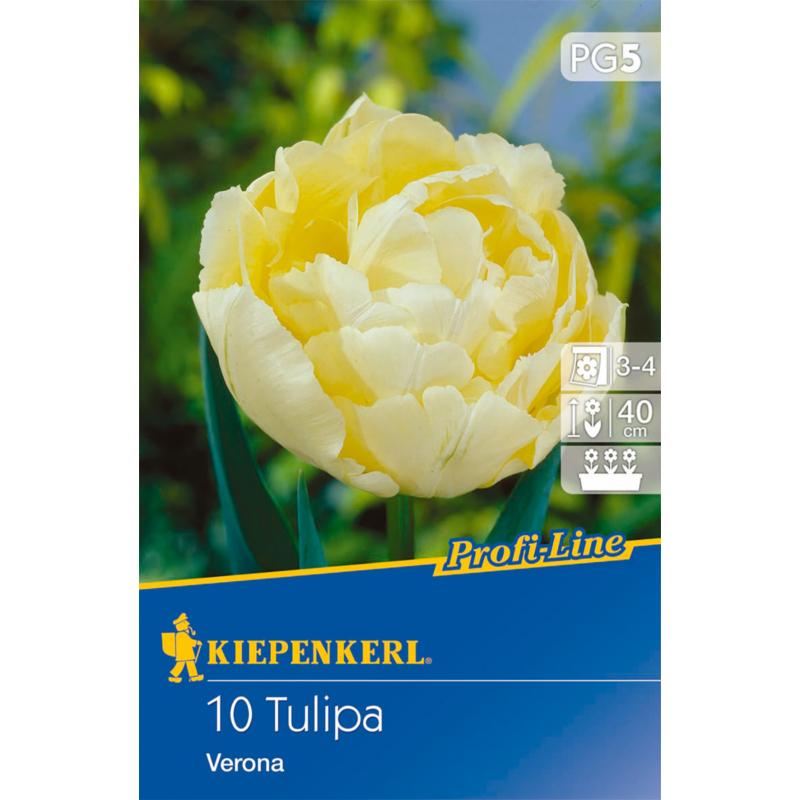 kiepenkerl tulipa verona tulipán virághagymák