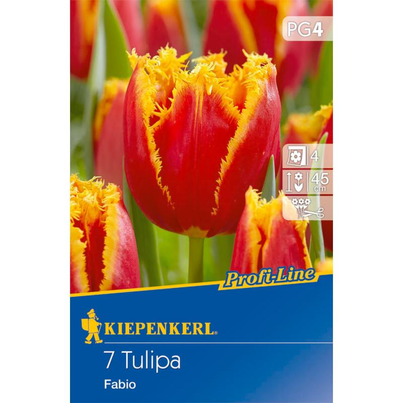 kiepenkerl tulipa fabio tulipán virághagymák