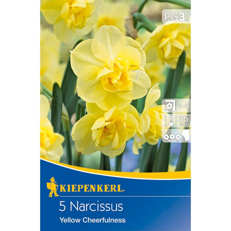 kiepenkerl yellow cheerfulness nárcisz virághagymák