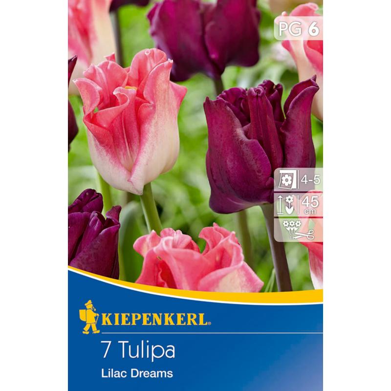 kiepenkerl lilac dreams vegyes korona tulipán hagymák