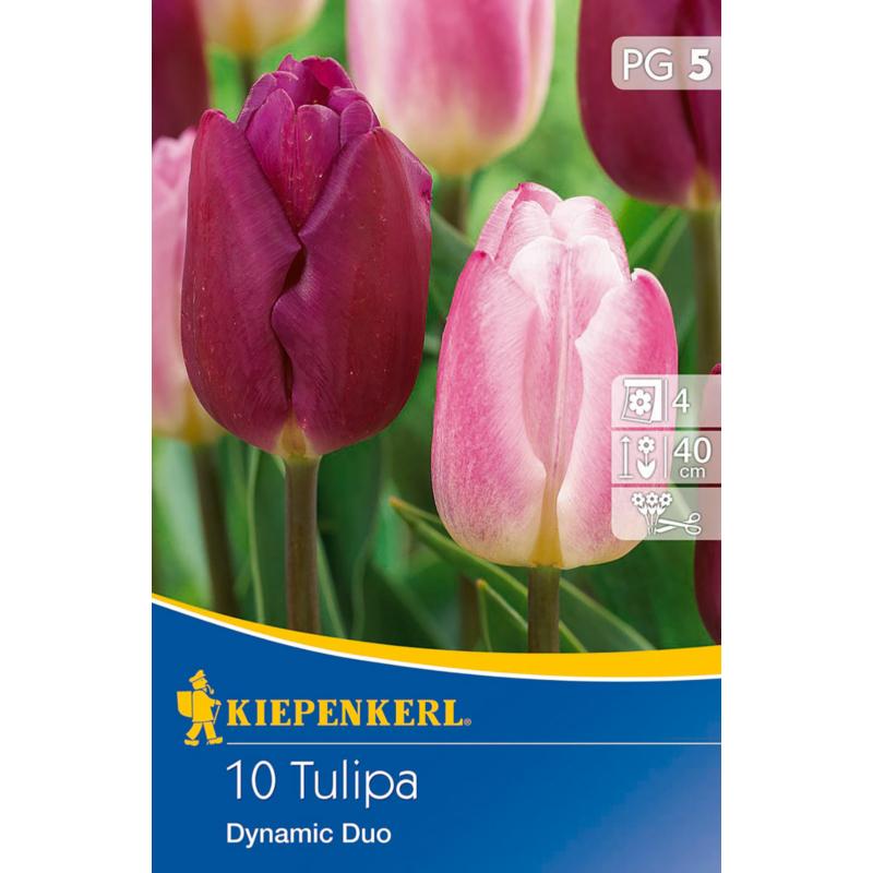 kiepenkerl dynamic duo tulipán virághagymák