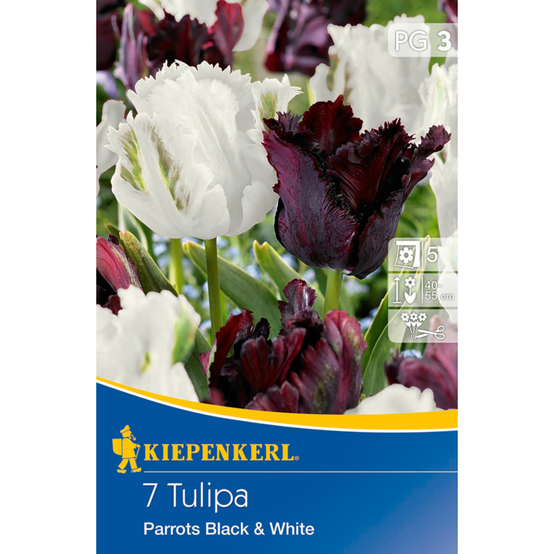kiepenkerl parrots black and white tulipán virághagymák