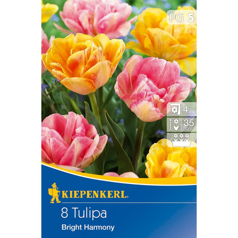 kiepenkerl bright harmony tulipán virághagymák
