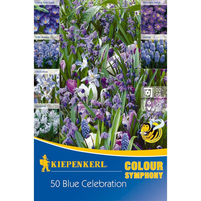kiepenkerl blue celebration virághagyma összeállítás