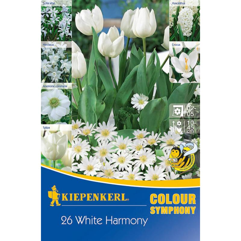 kiepenkerl white harmony fehér virághagyma összeállítás