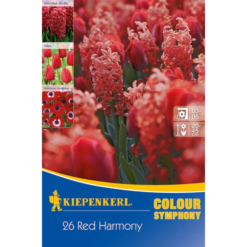 kiepenkerl red harmony piros virághagyma összeállítás