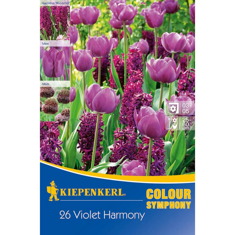 kiepenkerl violet harmony lila virághagyma összeállítás