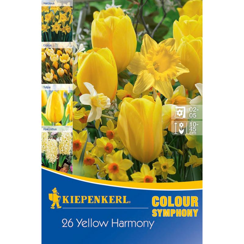kiepenkerl yellow harmony sárga virághagyma összeállítás