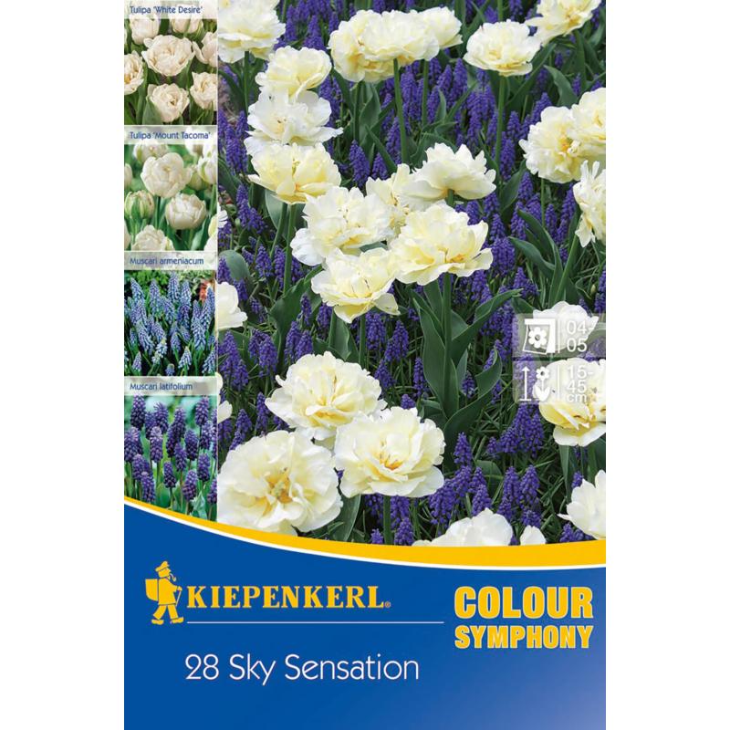kiepenkerl sky sensation vegyes színű virághagyma összeállítás